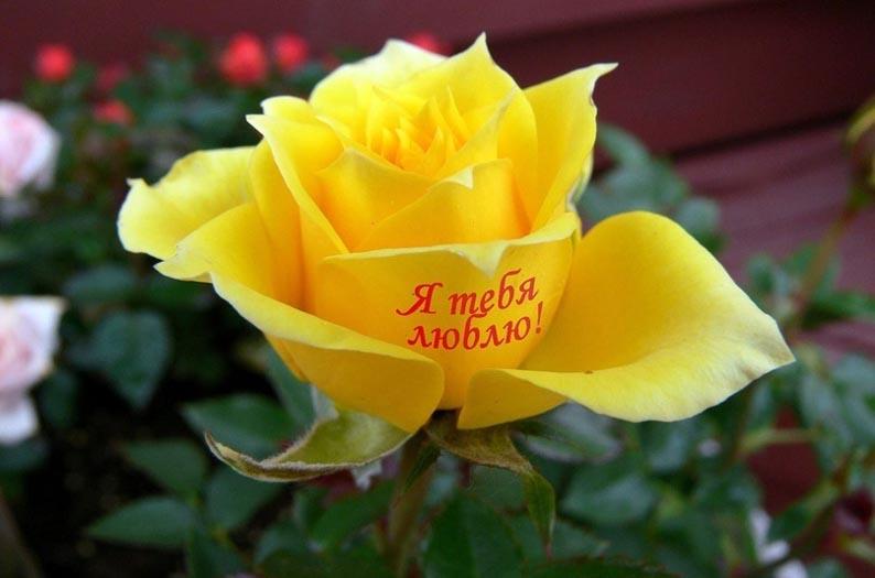 наклейка на цветке