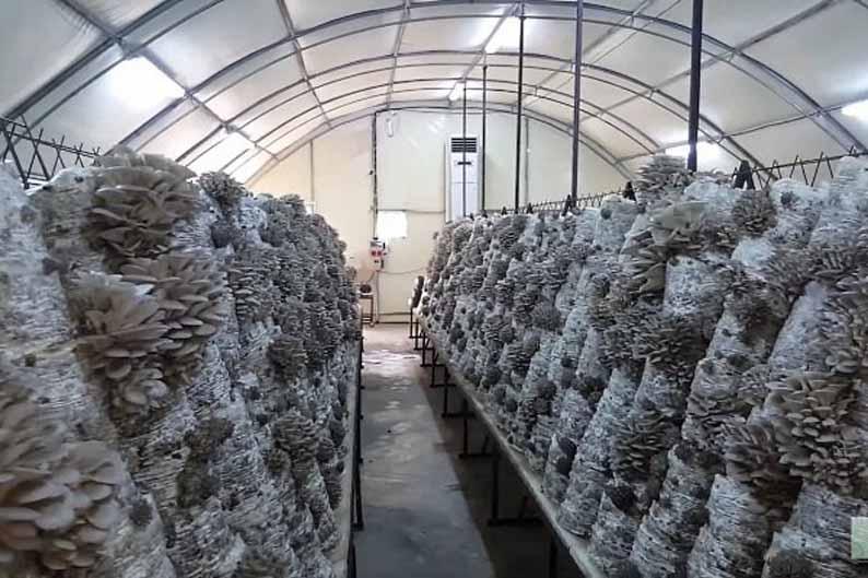 теплица для выращивания грибов